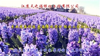 多年生草坪草種子報價-大慶噴播護坡草種子
