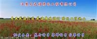 大油草種子哪種好-蘭州噴播護坡草種子
