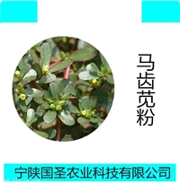宁陕国圣马齿苋提取物 马齿苋粉 代加工 固体饮料 压片糖果 资质
