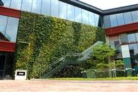 河北垂直绿化公司