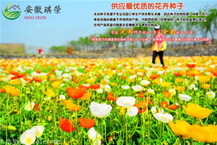 广西柳州市春天花海方案