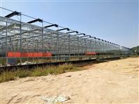 湖南自动控温有机蔬菜种植大棚温室565外墙、7000平方承建公司