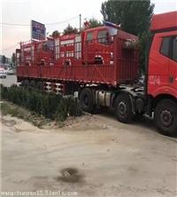 小霸王消防洒水车价格 贵港消防车厂家