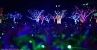 灯光艺术节 2018创新灯光节策划