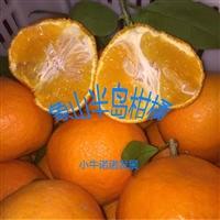 柑橘新品種紅美人,早熟雜柑,一年生柑桔苗,象山基地直發