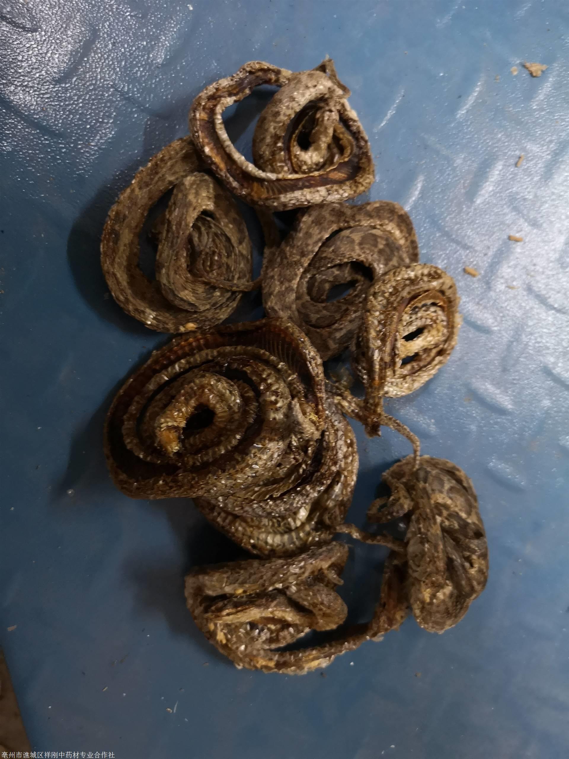 金钱白花蛇功效与作用,金钱白花蛇价格多少钱一公斤