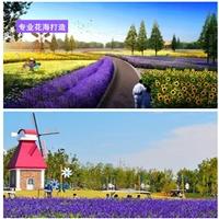 河南省鄭州市百日草種子哪里有賣