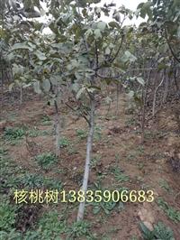 各种规格果树