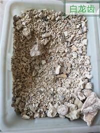 龙齿的作用与功效 白龙齿产地批发价格 哪里可以购买多少钱一公斤