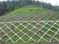 路橋公司大量采購草種 黔西南種子公司供應商