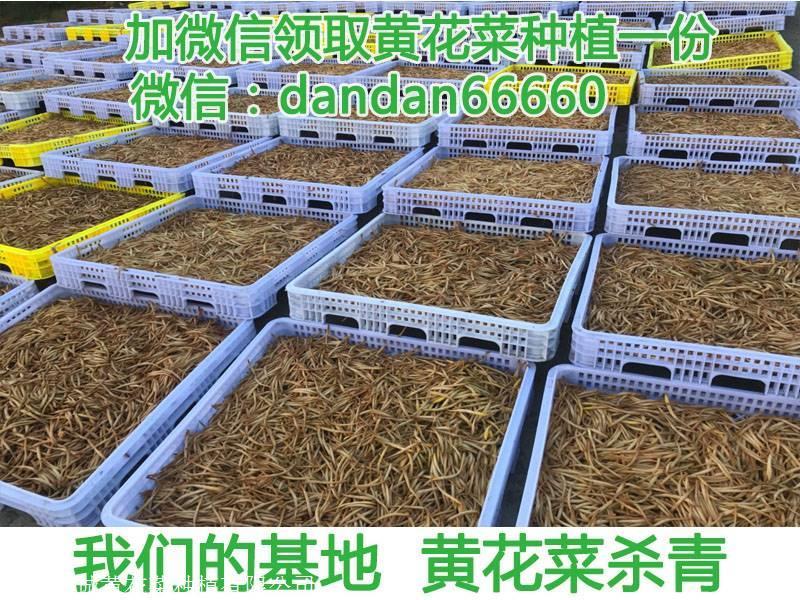 黄花菜多少钱一斤.黄花菜去原产地购买,大概是多少钱一斤