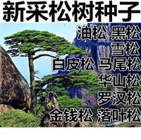 油麻藤种子怎么卖-安庆油麻藤种子批发价格