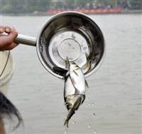 福建專業供應放生魚