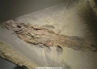 拍賣快速出手 古生物化石鑒定拍賣定價