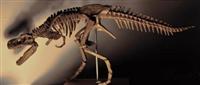 恐龙化石赝品多不多如何分辨
