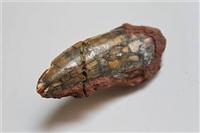 恐龙牙化石想卖去什么地方能交易