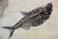 鱼化石收购市场今年怎么样