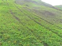 江苏草籽喷泥机绿化专用设施