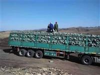遼寧草炭土生產基地