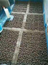 玉溪陶粒每方價格、玉溪陶粒直銷