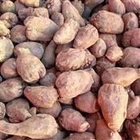 納雍織金魔芋種子供應商 安順魔芋種子批發