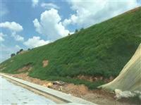 廣西桂林綠化草籽柳州灌木種子直銷