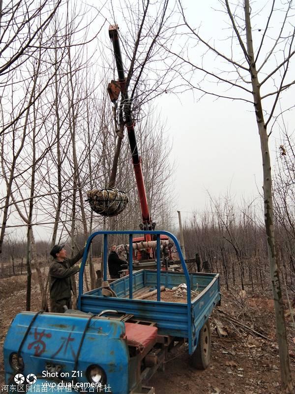 种植北美海棠的土壤要求