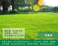 四川省遂宁市护坡草坪种子种植时间-指导种植