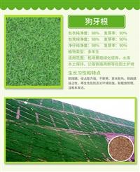 迪庆草坪种子哪里有卖的-高发芽率95
