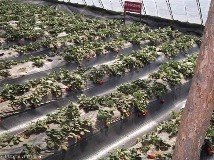 北京除草布价格 防草布厂家