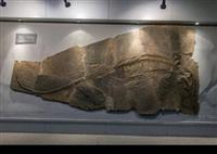 鱼龙化石哪里有人拍卖