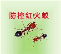 桂林赫鼎鴻紅火蟻防治滅紅火蟻