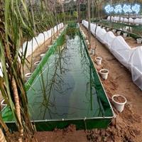 帆布魚池 養蝦帆布水池 耐用嗎 幫你養殖