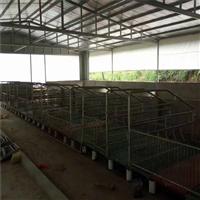 定做畜牧养殖场猪场卷帘布 透光篷布 保温油布 防水抗冻帆布