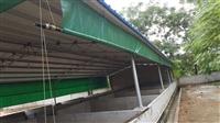 养殖场牛棚卷帘布 猪场卷帘帆布 遮阳篷布透光帆布
