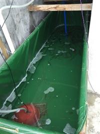 定做帆布水池 折叠游泳池 鱼池龟池锦鲤池篷布水池 生产厂家批发