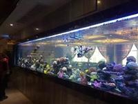 白云专业海鲜池制作 广州洋清水族海鲜池定做 海鲜池免费设计