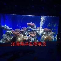 洋清海洋生物展出租 海洋展活動方案 創意景觀海洋
