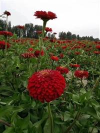 十月开花草花种子现在种植