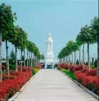 洛陽陵園l九皇仙府免費看墓車