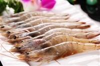 养对虾要注意哪些问题