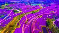 四季花海-陕西省渭南市公司承接项目打造