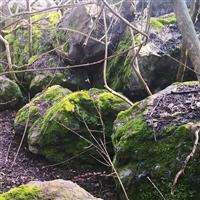 日式枯山水景观、野山石、黑山石、日式庭院