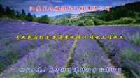 小米草種子-忻州噴播綠化小米草種子怎么種