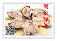 牡蛎提取物厂家供货