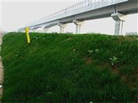廣西桂林購買草種的地方在哪里