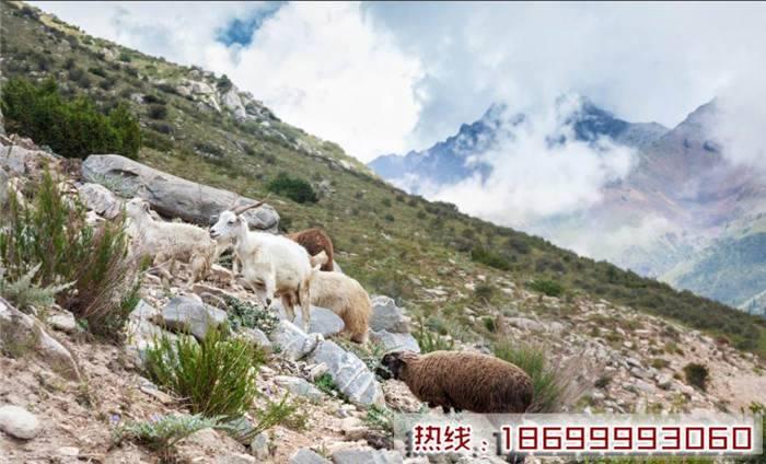哈萨克斯坦进口羊肉推荐 哈萨克斯坦进口羊肉联系电话
