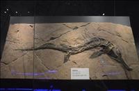魚龍化石上門收購市場和價格