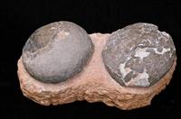 恐龙蛋化石快速交易拍卖公司