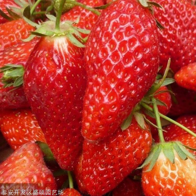 30公分高 奶油草莓苗如何土壤追肥